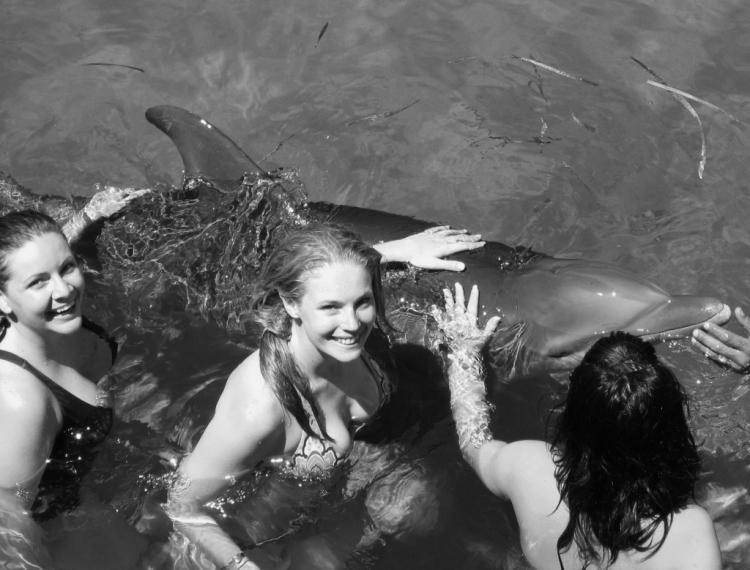 dolphin4 (1)