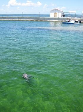 dolphin4 (2)