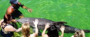 dolphin4 (4)